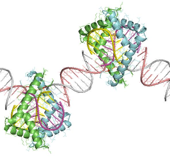 box-A-HMGB1+DNA